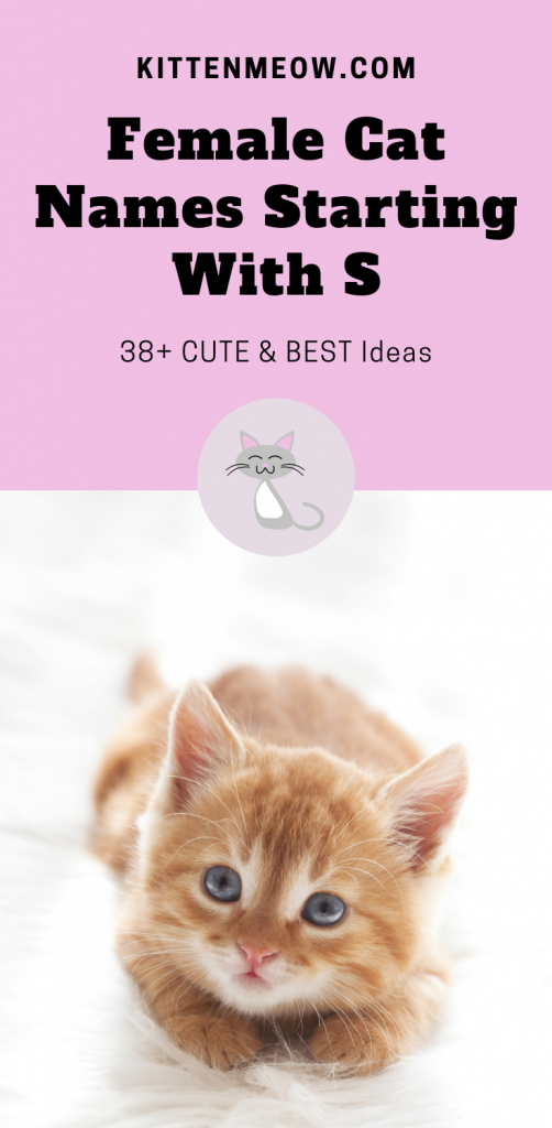 Female cat names starting with s pin