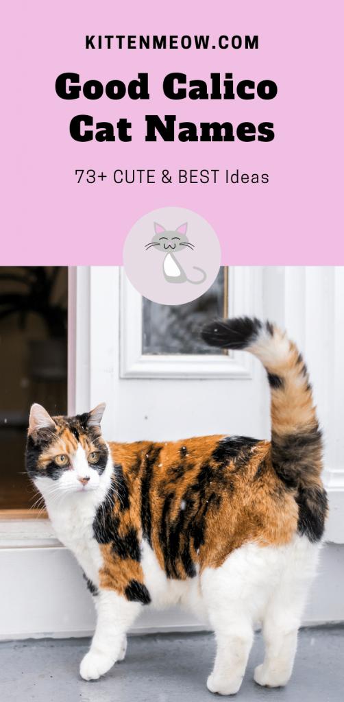 Good Calico Cat Names Pin