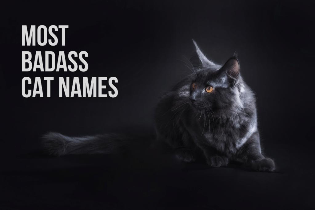 Most Badass Cat Names