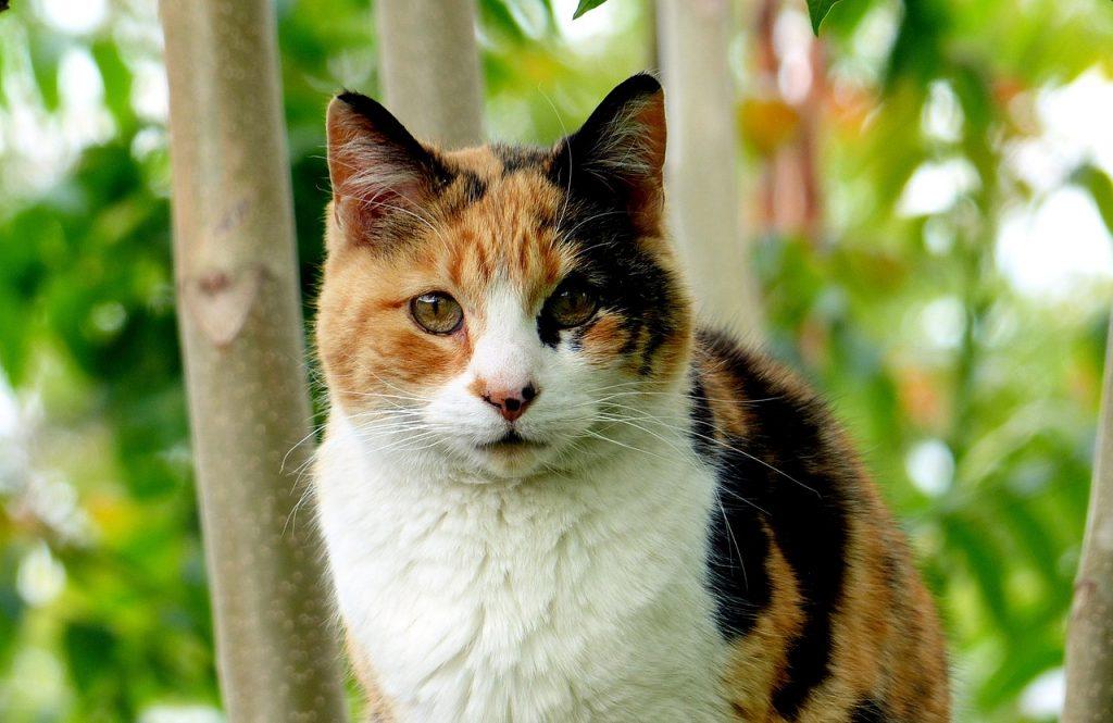 Unique Calico Cat Names