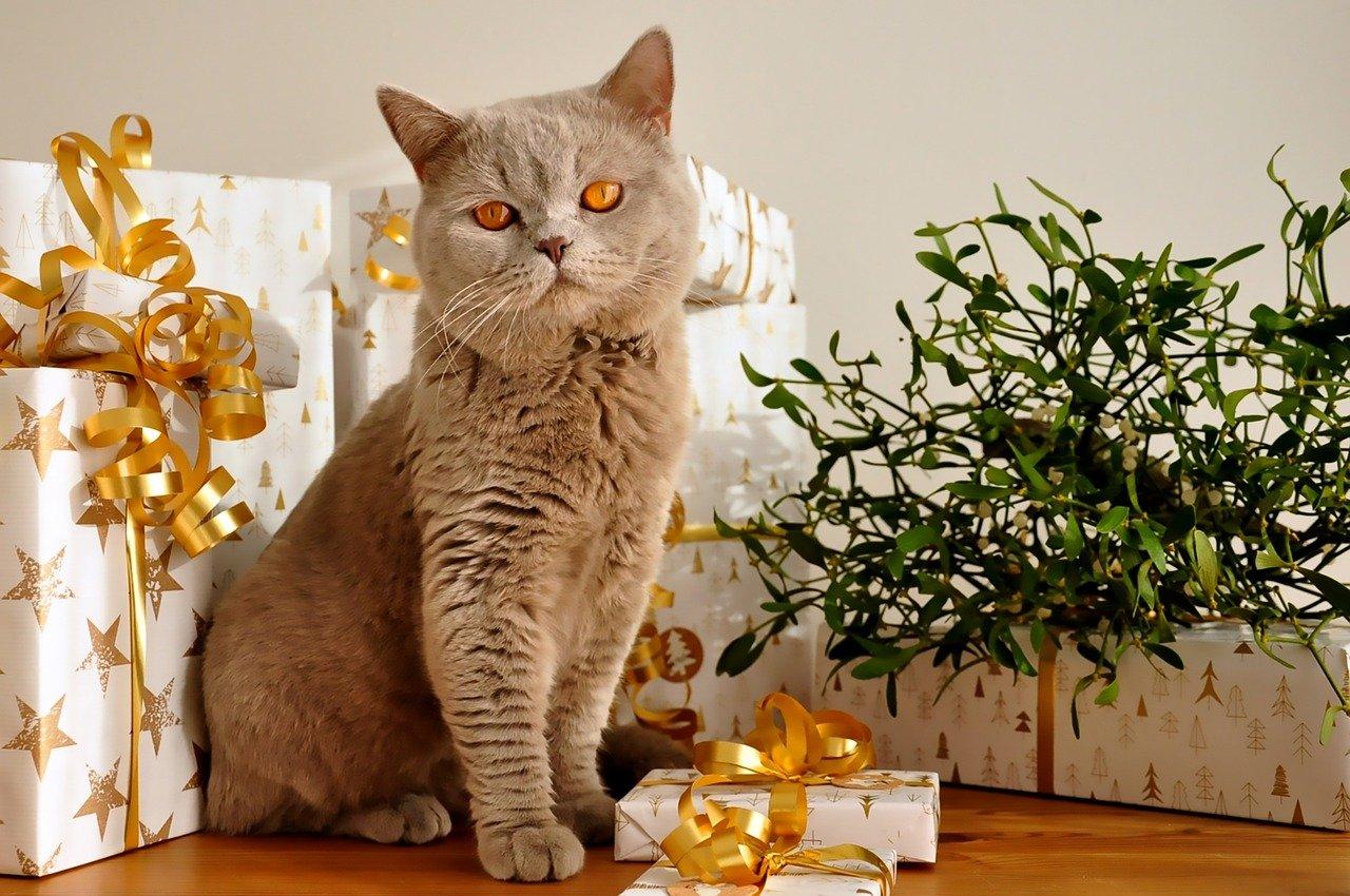 christmas cat names