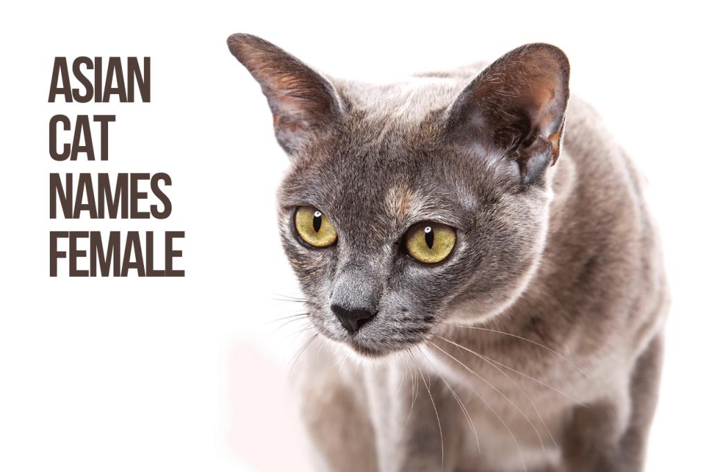 Asian Cat Names Female