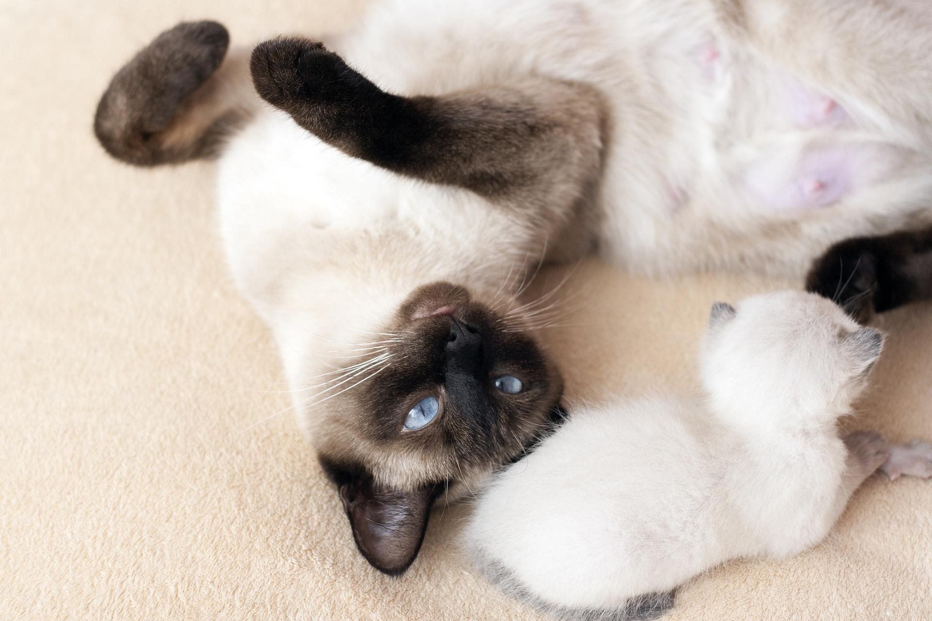 asian cat names