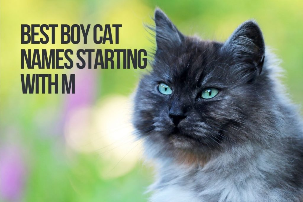 Best Boy Cat Names Starting With M