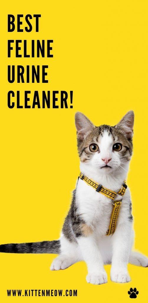 Best Feline Urine Cleaner pin