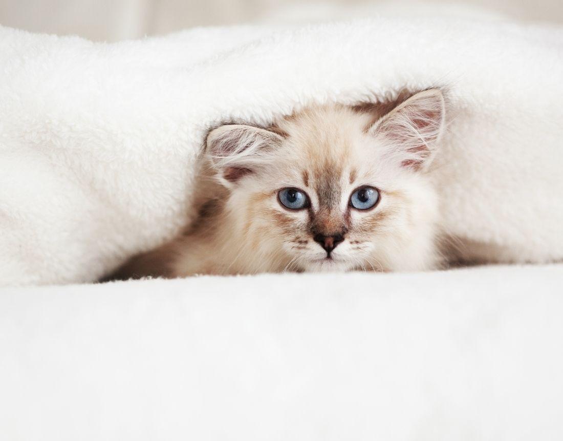 Best Feline Urine Cleaner