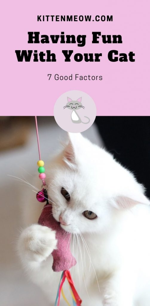 Having Fun With Your Cat pin