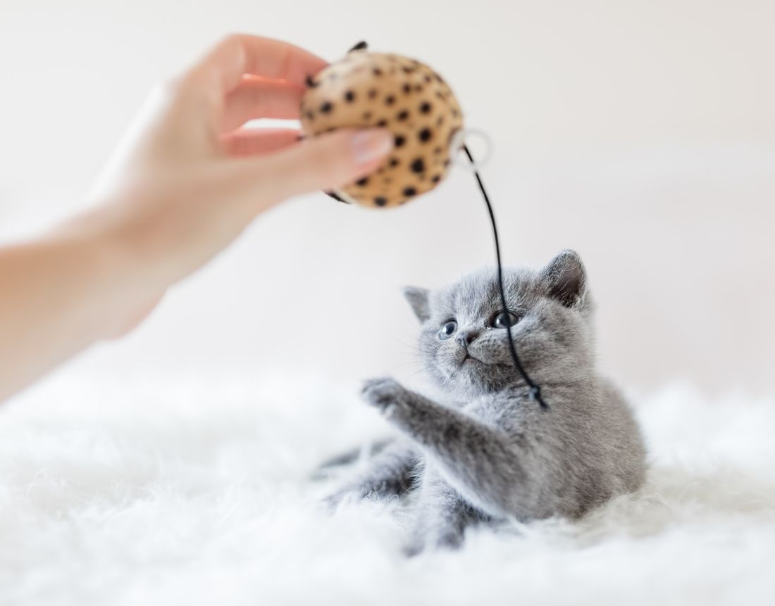 Having Fun With Your Cat