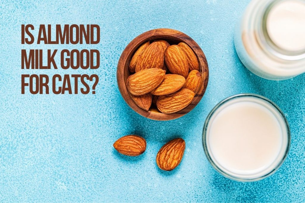 Is almond milk good for cats