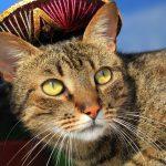 Mexican Cat Names